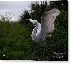 Acrylic Print featuring the photograph Egret Wings by Art Whitton