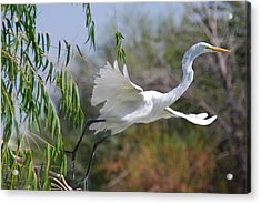 Acrylic Print featuring the photograph Egret's Flight by Tam Ryan