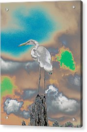 Egrit Acrylic Print by Perry Conley