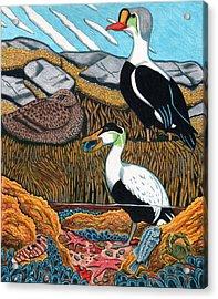 Eider Ducks Acrylic Print by John Meszaros