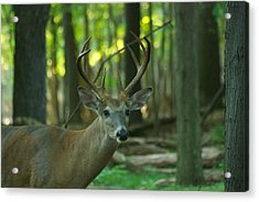 Eight Point_9531_4366 Acrylic Print by Michael Peychich