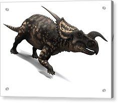 Einiosaurus Dinosaur, Artwork Acrylic Print by Sciepro
