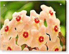 Acrylic Print featuring the photograph Eis A Hoya by Puzzles Shum
