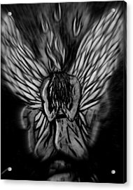 El Angel Black And White Acrylic Print by MikAn 'sArt