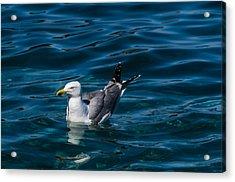 Elba Island - Solitary Bird - Ph Enrico Pelos Acrylic Print