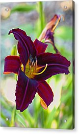 Electric Maroon Lily Acrylic Print by Bill Tiepelman