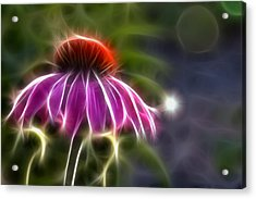 Acrylic Print featuring the photograph Electrified Coneflower by Lynne Jenkins