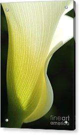 Elegance II Acrylic Print by Beth Buelow