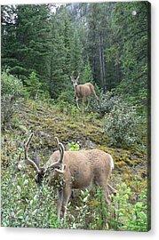 Elegant Elk Acrylic Print