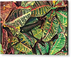 Elena's Crotons Acrylic Print by Marionette Taboniar