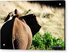 Elephant And His Butt Acrylic Print by Alexandra Jordankova