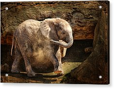 Elephant Calf Acrylic Print