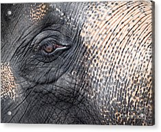 Elephant Close-up Portrait Acrylic Print by Johan Larson
