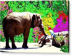 Elephant-parrot Dialogue Acrylic Print by Romy Galicia