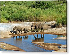 Elephant Reflections And The Sand River Acrylic Print