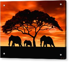Elephant Sun Set Acrylic Print by Walter Colvin