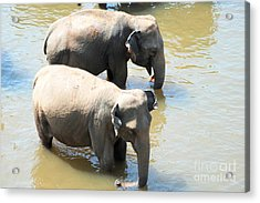 Acrylic Print featuring the photograph Elephants In Water by Pravine Chester