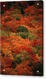 Elevated View Of Autumn Foliage Acrylic Print by Raymond Gehman