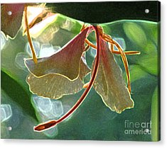 Acrylic Print featuring the photograph Elizabeth In Abstract by Deborah Smith