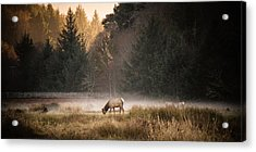 Elk Camp Acrylic Print by Randy Wood