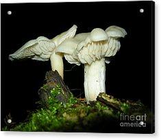 Elm Oysters Acrylic Print