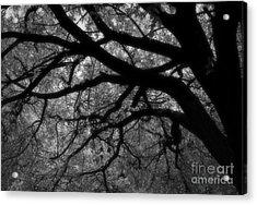 Elm Tentacles Acrylic Print by Fred Lassmann