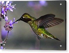 Emerald Beauty Acrylic Print by Paul Marto