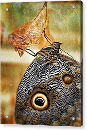 Emergent Culture Acrylic Print by Skip Hunt