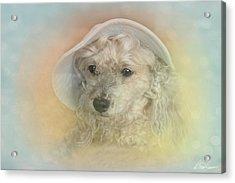 Emily's Bonnet Acrylic Print by Diana Haronis