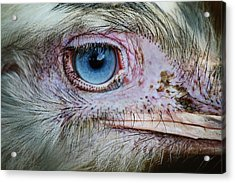 Emu Eye Acrylic Print by Paulette Thomas