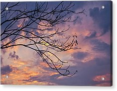 Enchanted Evening Acrylic Print by Rachel Cohen