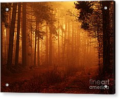 Enchanted Forest Acrylic Print by Clare Scott