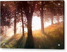 Enchanted Meadow Acrylic Print by Debra and Dave Vanderlaan