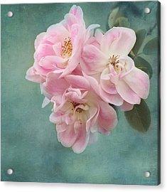 Enchanted Pink Rose Acrylic Print