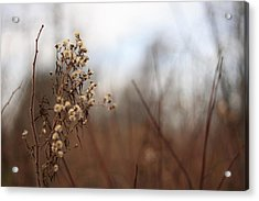 End Of Autumn Acrylic Print by Brady D Hebert
