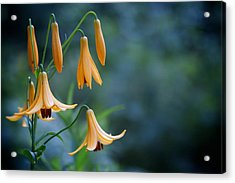 End Of June Two Acrylic Print by Nathan Larson