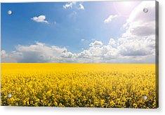 Endless Yellow Canola Field Acrylic Print by © Bjorn van der Meijs