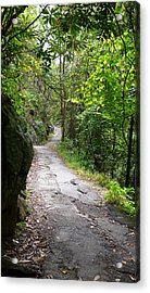 Enduring Path Acrylic Print by Michael Carrothers