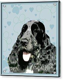 English Cocker Spaniel Acrylic Print by One Rude Dawg Orcutt