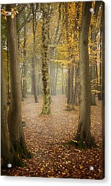 English Forest In Autumn Acrylic Print