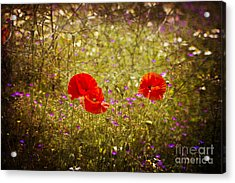 English Summer Meadow. Acrylic Print