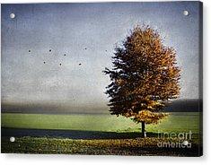 Enjoying The Autumn Sun Acrylic Print by Hannes Cmarits