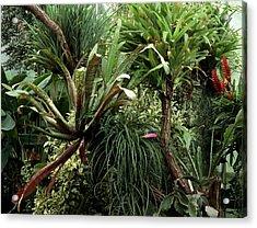 Epiphytic Bromelia Acrylic Print