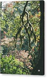 Epiphytic Moss Acrylic Print
