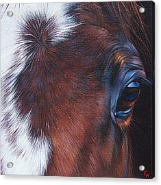 Equine 1 Acrylic Print by Elena Kolotusha