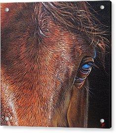 Equine 2 Acrylic Print