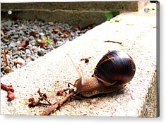 Acrylic Print featuring the photograph Escargot by Rosemarie Hakim