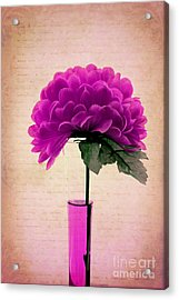 Estillo - 06t11 Acrylic Print by Variance Collections