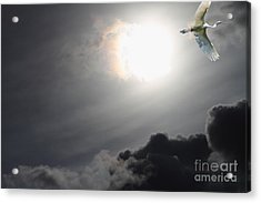 Eternity Acrylic Print by Wingsdomain Art and Photography