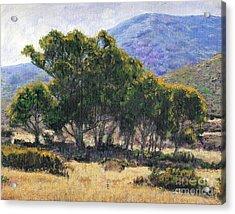 Eucalyptus Grove Catalina  Acrylic Print by Randy Sprout